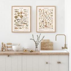 Les Champignons  / Les Jolies Planches
