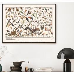 Les Oiseaux / Les Jolies Planches